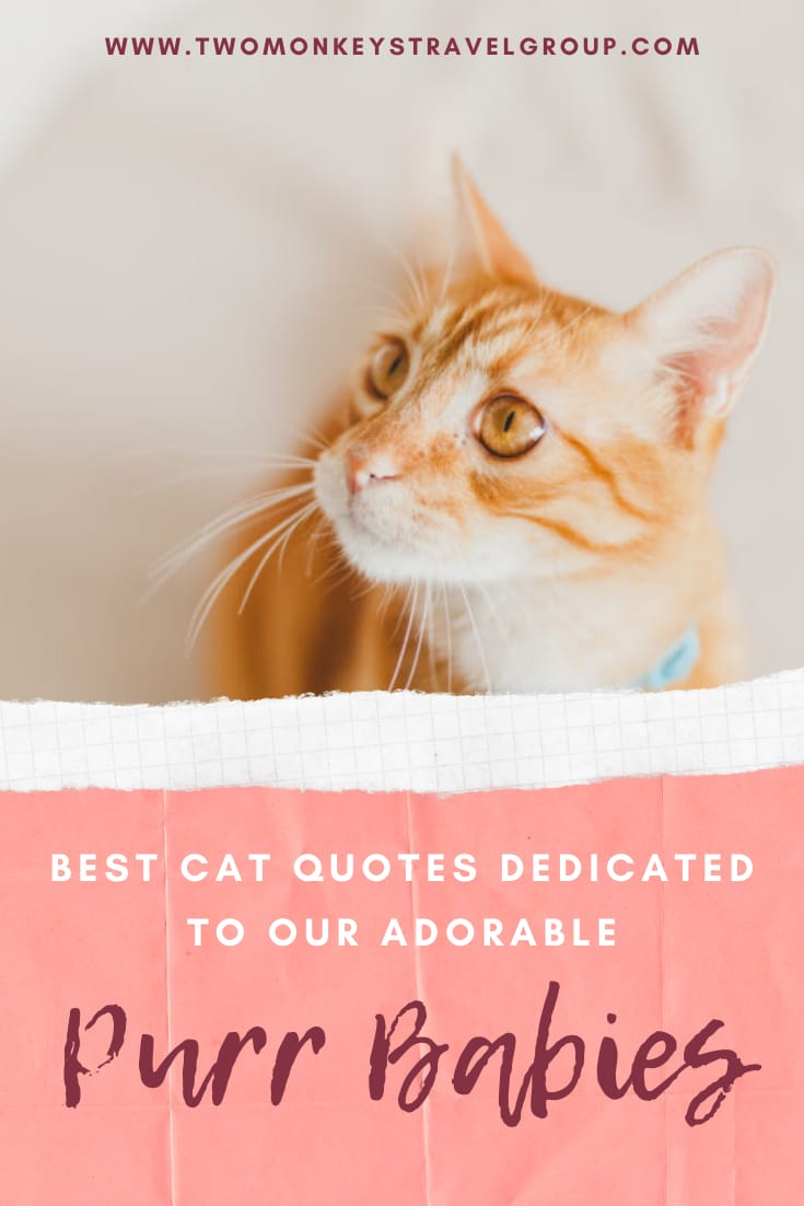 """44 Best Cat Quotes Dedicated to Our Adorable """"Purr"""" Babies"""