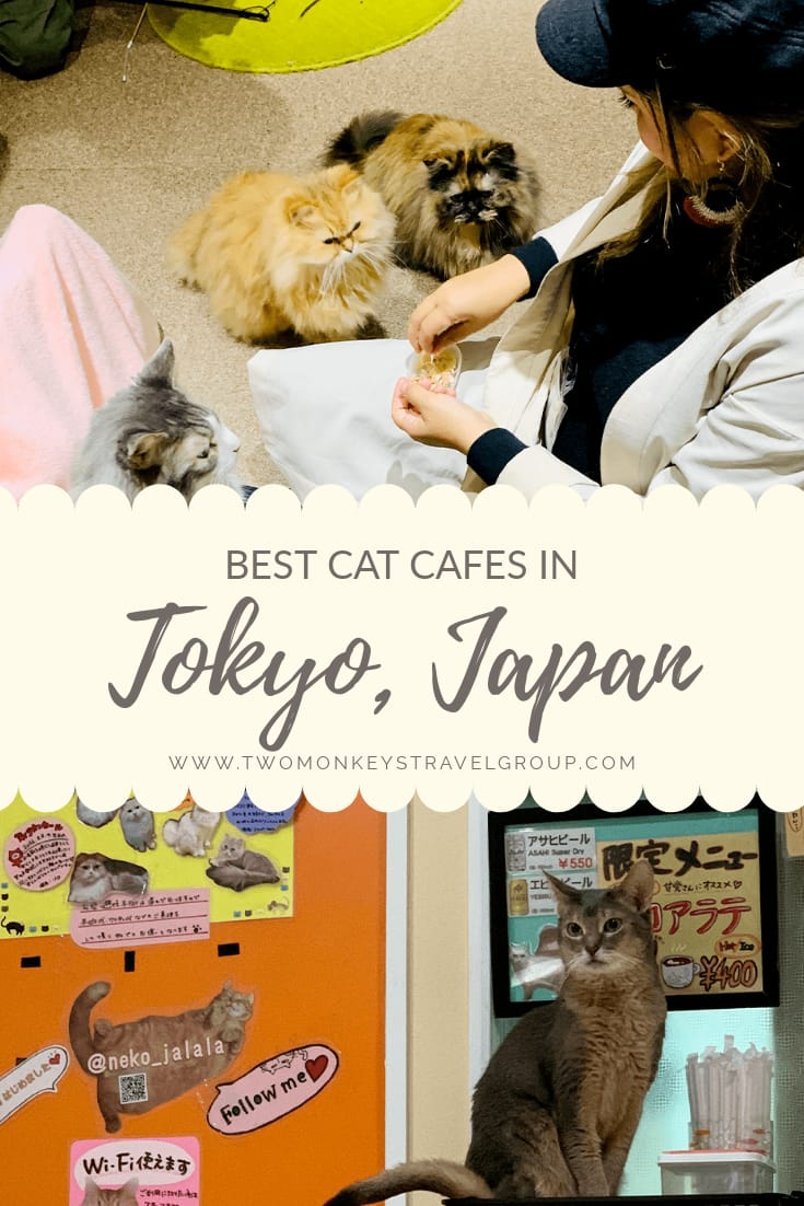 Best Cat Cafes in Tokyo, Japan [ With Tips and Rates Included]