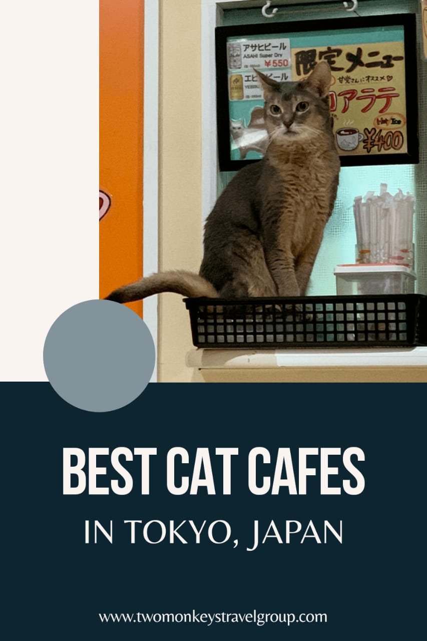 Best Cat Cafes in Tokyo, Japan [ With Tips and Rates Included]1