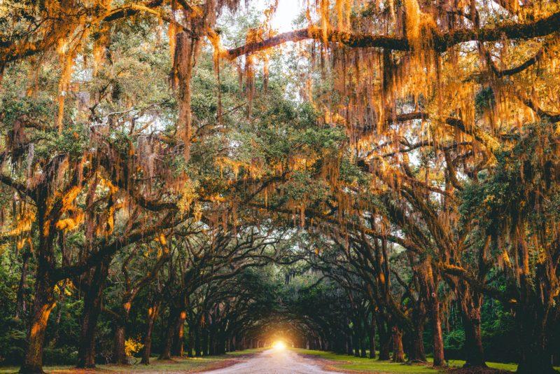 What to Eat in Savannah, Georgia? 9 Best Local Food To Try in Savannah