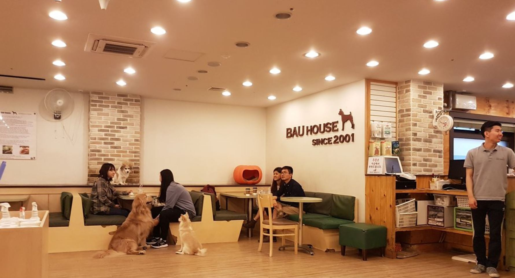 The Best and The Cutest Animal Cafes in South Korea
