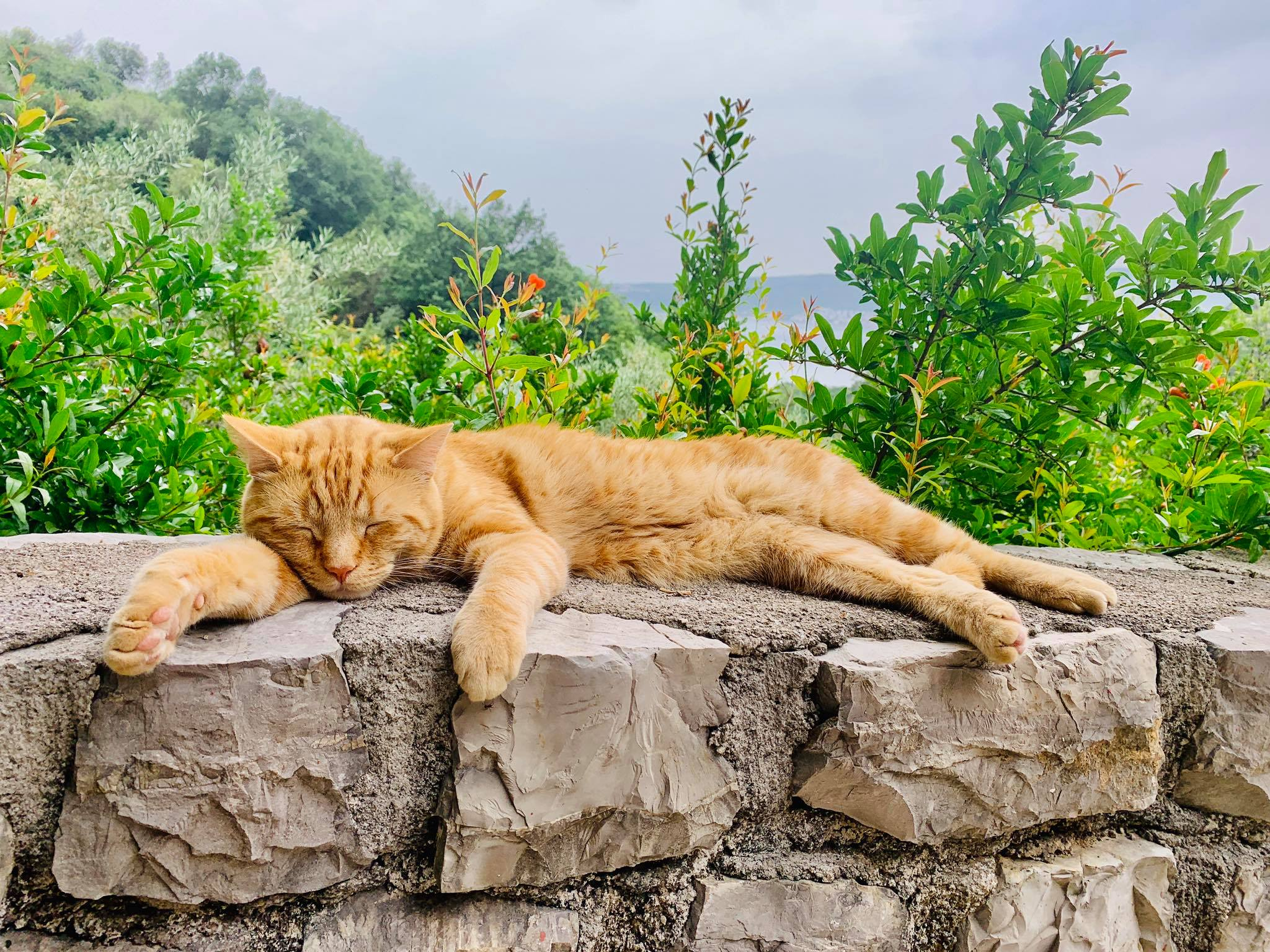 Where to Adopt Cats in Montenegro