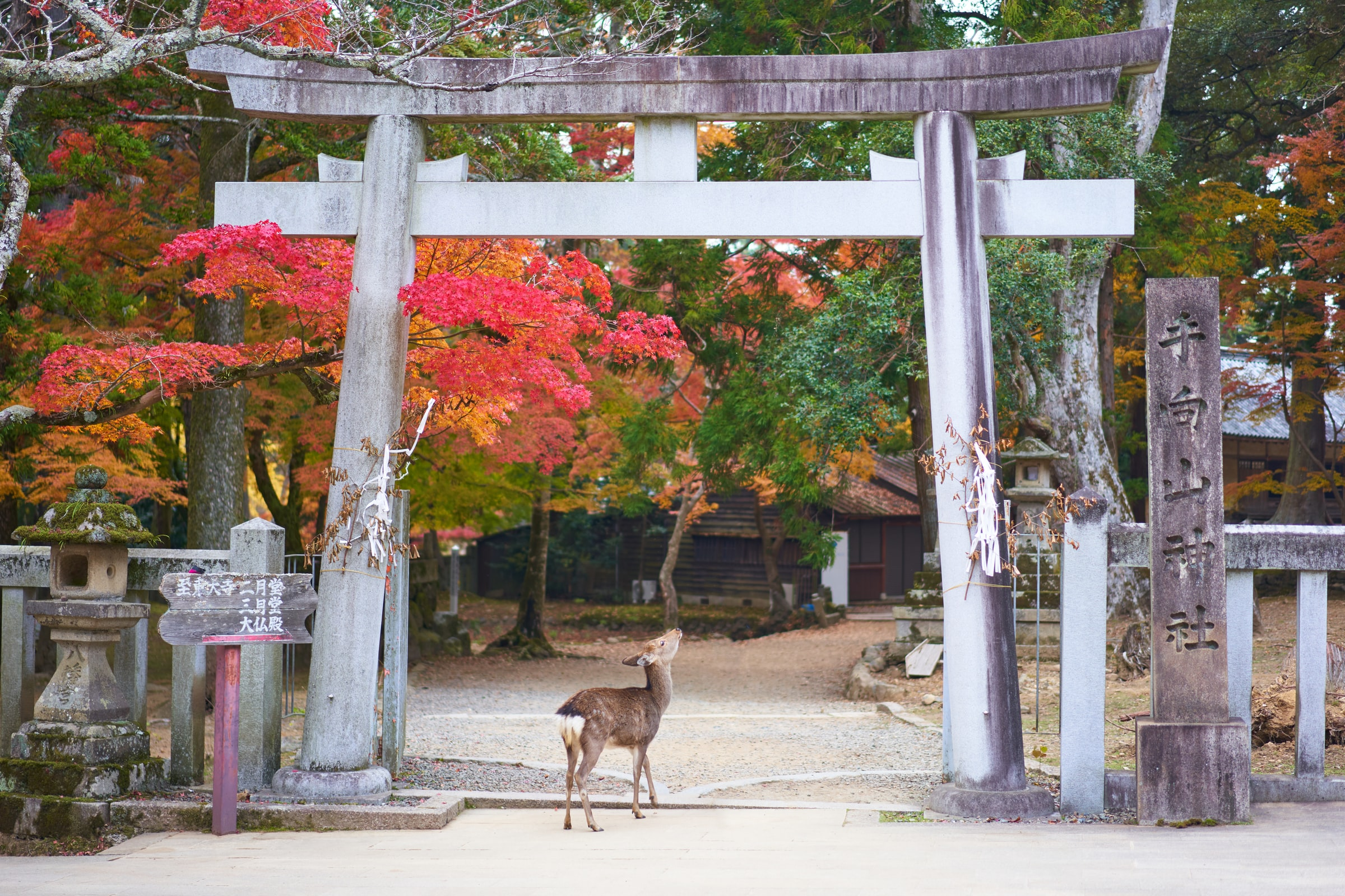 5 Things to do in Nara Prefecture, Japan (7)