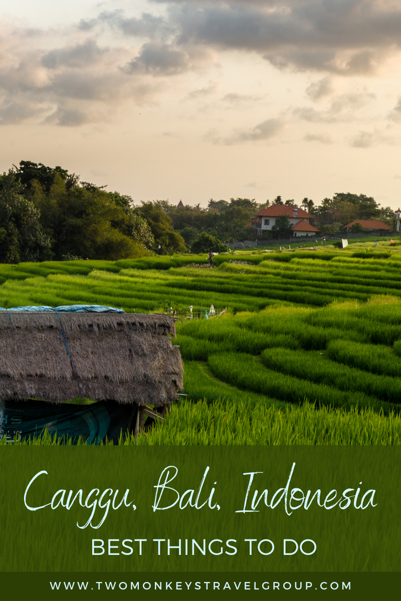 5 Best Things To Do in Canggu, Bali, Indonesia [DIY Travel Guide to Canggu]