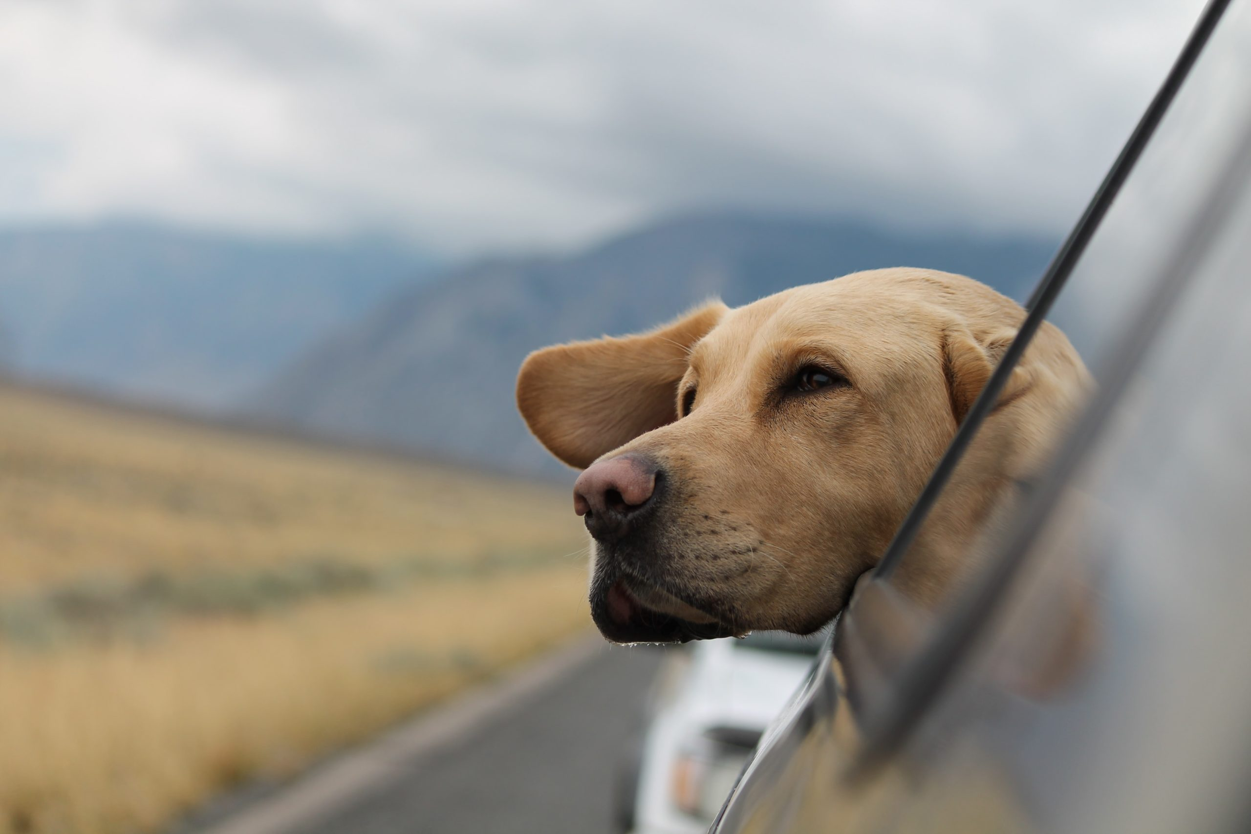 Seven Tips For Car Traveling With A Nervous Pet